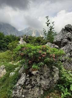 Fiori tra la roccia